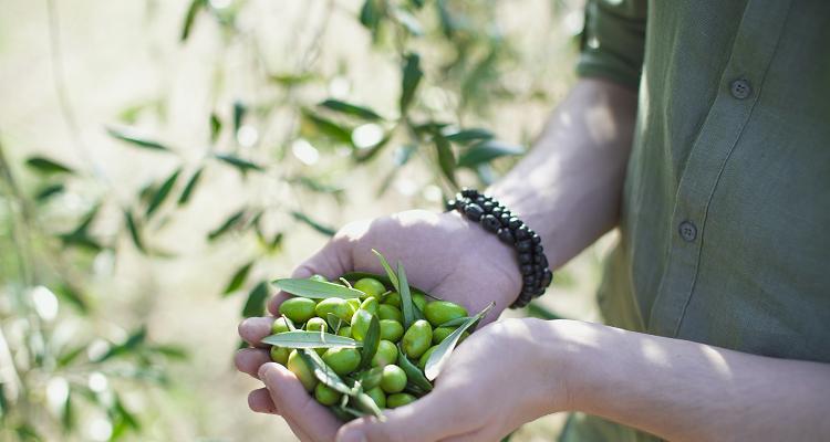 Mani che tengono una manciata di olive